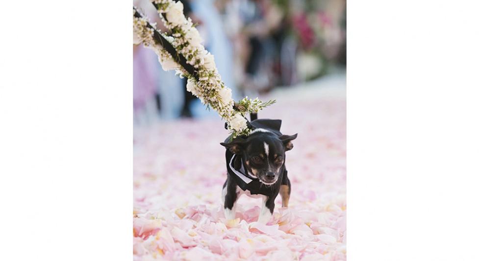 Wedding Planner Malibu Los Angeles 14